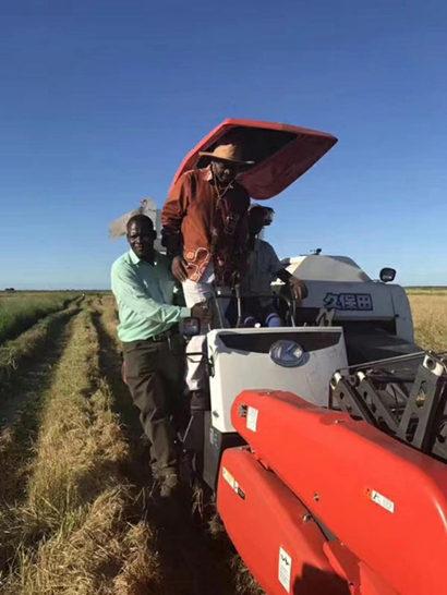 希望苗圃种植的湿地松已抵达莫桑比克